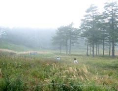 チェリーパークラインの終点、車坂峠付近。霧。